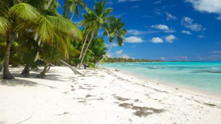 Wild caribbean beach landscape in Dominican Republic